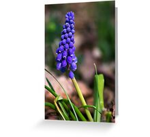 Grape Hyacinth Wildflower Art Greeting Card
