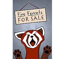 Fire Ferrets For Sale Photographic Print