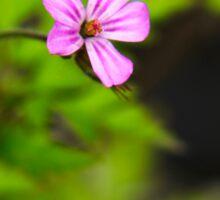Herb Robert Pink Wildflower Art Sticker