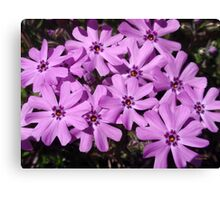 Phlox Flowers Abstract Canvas Print