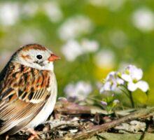 Field Sparrow Bird Art Sticker