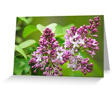 Beautiful Lilac Flowers Greeting Card