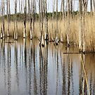 Crossway Creek Cedars by RVogler