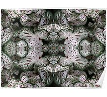 Reflections on Caladium Poster