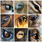 Eyes by Betsy  Seeton