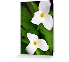White Trillium Flowers Greeting Card