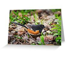 Eastern Towhee Greeting Card