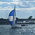 Deep Blue Sails On The Deep Blue, Narragansett Bay by Jane Neill-Hancock