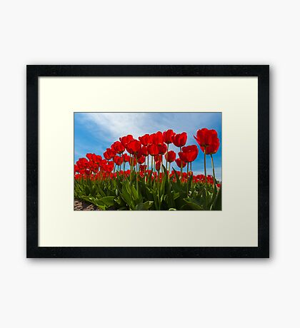 Life from the Tulip's View Framed Print
