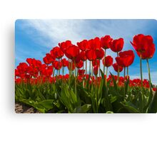 Life from the Tulip's View Canvas Print