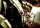 Welwitschia Plant Male Flowers by Carole-Anne