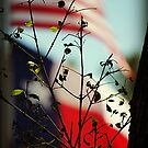 Flags of The USA and Texas Behind Spring Leaves by SJBroadmeadow