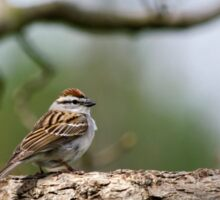 Chipping Sparrow in Tree Sticker