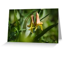 Trout Lily Flowers Greeting Card