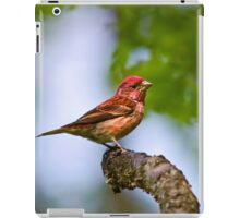 Purple Finch Bird Art iPad Case/Skin