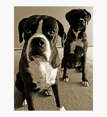 What do you mean she's right behind me .... -Boxer Dogs Series- Photographic Print