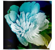 Blue Peony Flower Poster