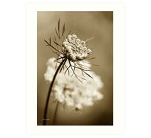 Sepia Wildflower Art Print