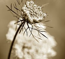 Sepia Wildflower Art by Christina Rollo