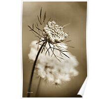 Sepia Wildflower Poster