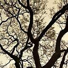Tree at Night | Sydney by RedDash