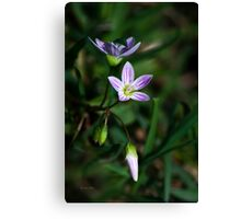 Spring Beauty Wildflowers Canvas Print