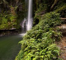Kaiate Fern Gully steps by Ken Wright
