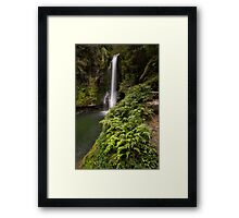 Kaiate Fern Gully steps Framed Print