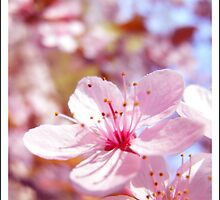 spring wears pink by andrea-ioana