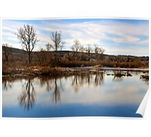 Trees on Tranquil Lake Poster