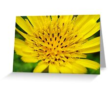 Yellow Salsify Flower Art Greeting Card