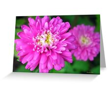 Pink Zinnia Flower Greeting Card