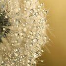 Sun Sparkled Dandy by Sharon Johnstone