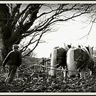 ploughing in moelfre by tina williams