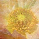 Pure and Delicate by Deborah  Benoit