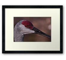 Sandhill Crane, As Is Framed Print