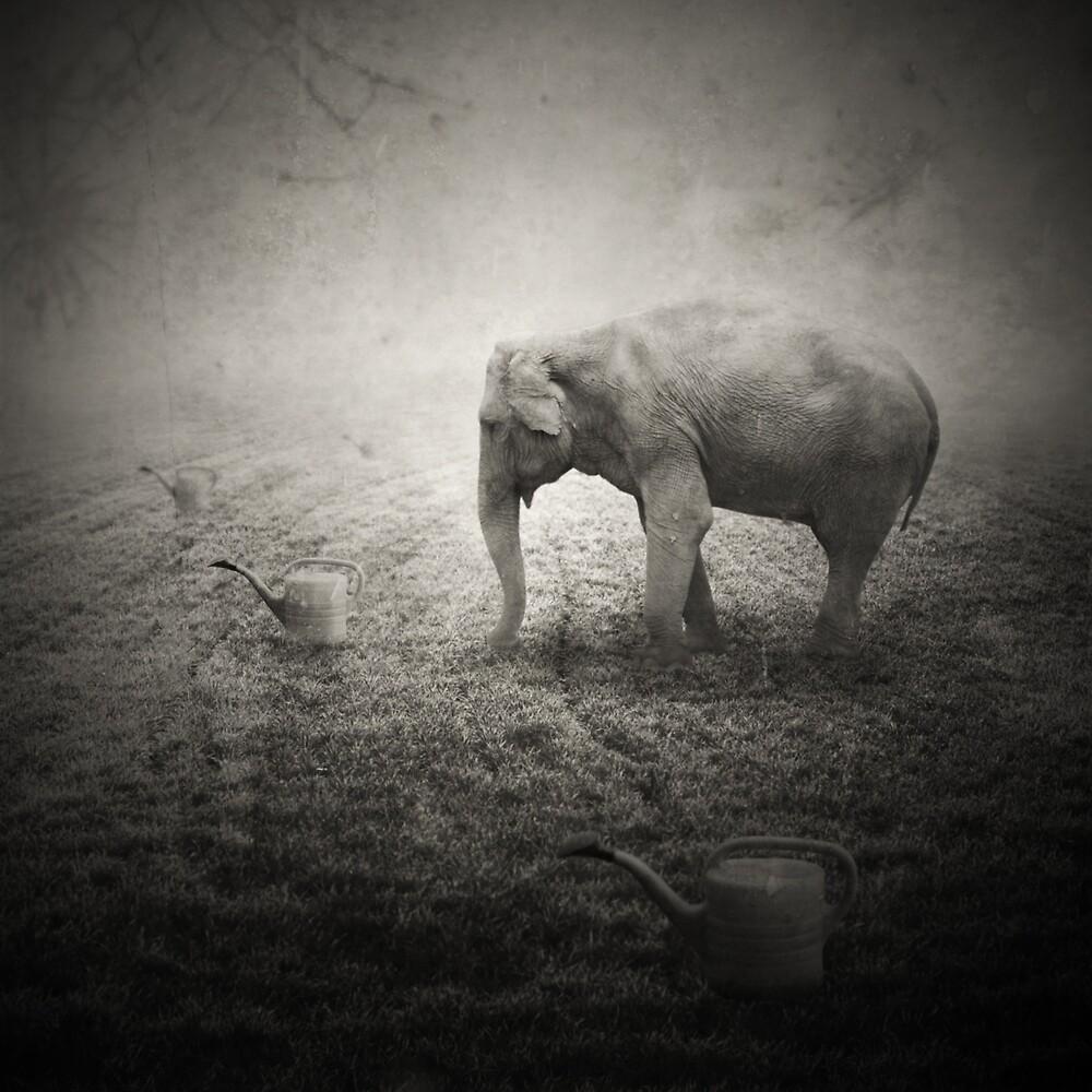 Animaly #15 by Krzysztof Wladyka