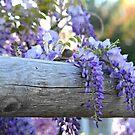 Lavender Takeover by reindeer