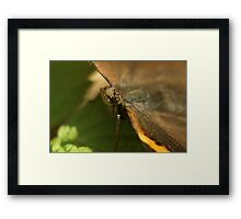 The Admiral Framed Print