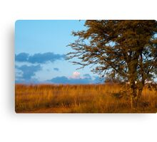 Typical South African Veld Canvas Print