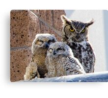 Horned Owl with Chicks Canvas Print