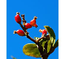 Little Red Fruit Photographic Print