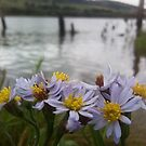 Wild Flowers on the Clyde by kieransdaddy