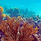 Underwater Garden by globeboater