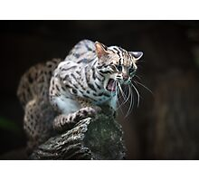 Angry leopard cat saying meow Photographic Print