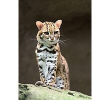 Very annoyed leopard cat Photographic Print