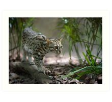 Wild cat hunting in the grass Art Print