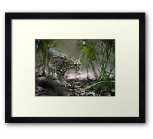Wild cat hunting in the grass Framed Print