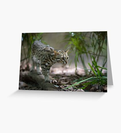 Wild cat hunting in the grass Greeting Card