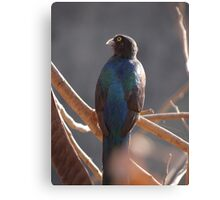 Do You Like My Colours Too? - Te Gusta Mis Colores Tambien Canvas Print